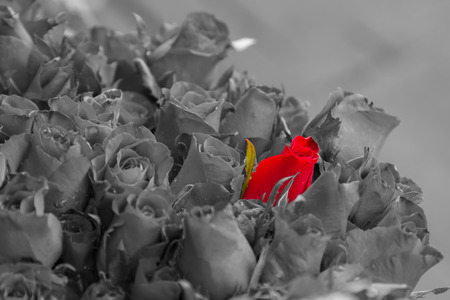 Standing out in a crowd red rose