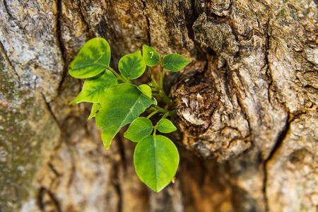 regeneration: Rigenerazione di albero