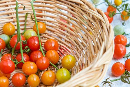 Organic tomatoes on white wooden floor