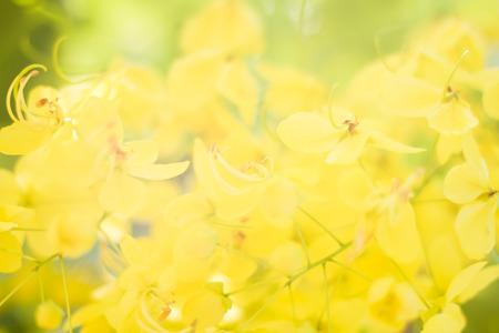 Soft focus blur of yellow flowers Thailand.