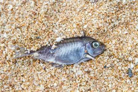 dead fish: dead fish on the beach