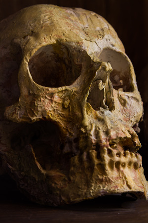 Skull in the shadows, something terrible and death. Stock Photo
