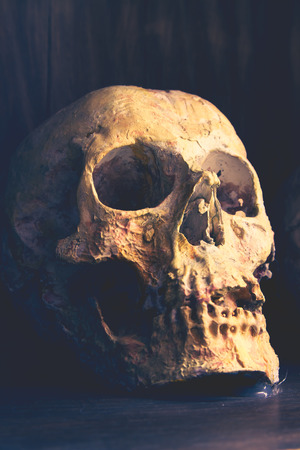 Skull in the shadows, something terrible and death and making pictures vintage dark and look old