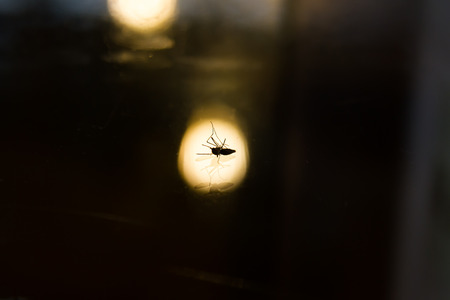 taint: Mosquitoes are dangerous with black background blur, shadows and light.