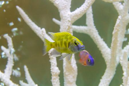 reeffish: Beautiful fish in the aquarium.