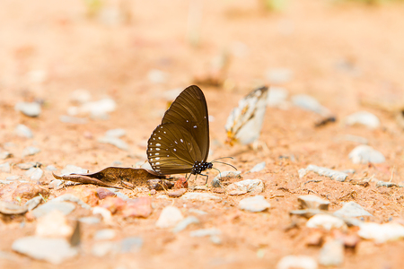 nice body: Beautiful butterfly Completely natural