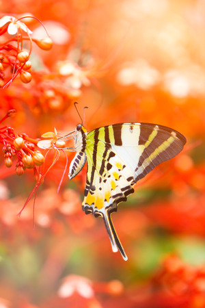completely: Beautiful butterfly Completely natural