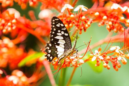 Schöne Schmetterling ganz natürlich