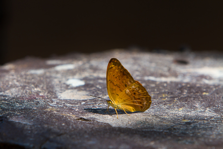 Beautiful butterfly Completely natural
