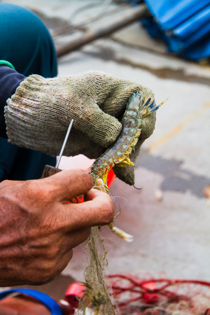 The fishing is the livelihood of the locals.