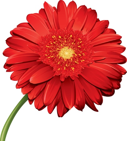 Gerbera Daisy Illustration