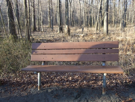 an empty bench along a wooded walkway