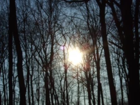 a view of the autumn sun through some trees