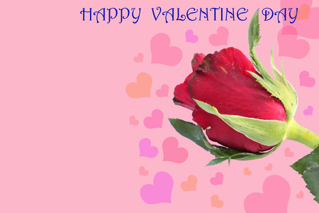 text free space: Single Valentine rose Background  with free space for text Stock Photo