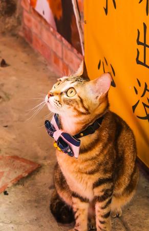 Closeup One cute cat in front of Shop in Jiufen Village,Taiwan