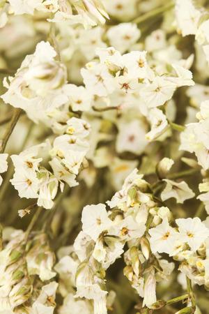 Macro of group white dry flower on white background