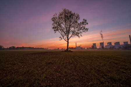 A lone tree in a field with Ferrybridge Power Station in the background,taken at sunrise.