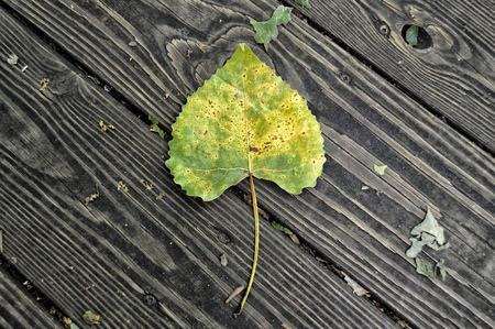 Board Leaf Stok Fotoğraf