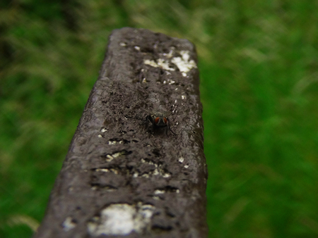 Fly on a park bench Stock Photo