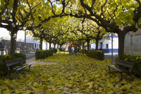 hojas: Autumn