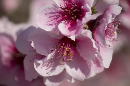 Floracion2 Primera Foto de archivo - 37724727