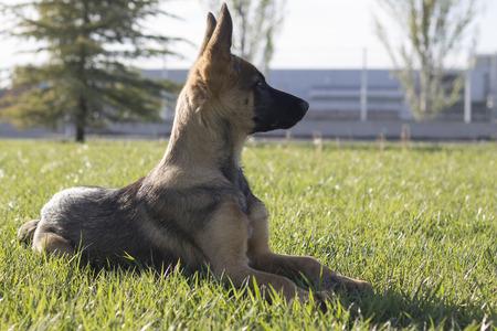 Rex con cuatro meses Foto de archivo - 39057943