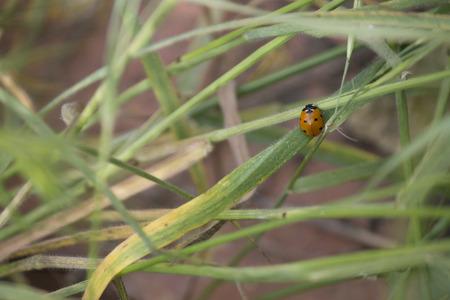 herba: The grass Stock Photo