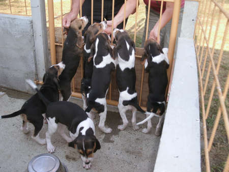 caresses: 6 puppies in a kennel asking hugs Stock Photo