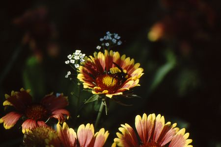 Yellow and red flow with bee inside top view