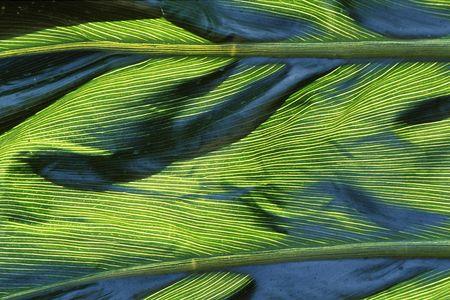 Closeup of a large plant leaf shows a unique pattern and texture Stock fotó