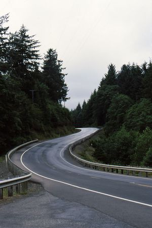 undulating: Winding road through the pine trees with undulating curves Stock Photo