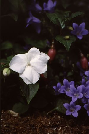 White flower standout among beautiful, deep colored blooms