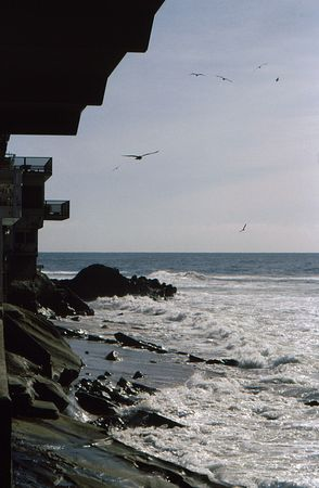 Coastal community view looking up the coast with flocking gulls and waves