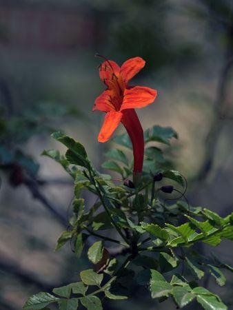 Orange tropical flower Stock fotó