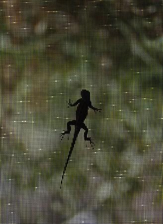 Lizard crawling on screen panel