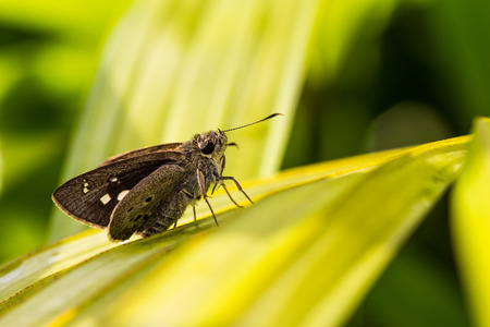 Tiger Moth Butterfly photo