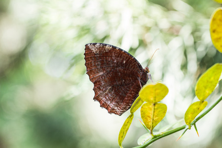 aphantopus: Brown butterfly Stock Photo