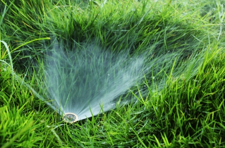 Closeup of small water sprinkler embedded in a grass lawn photo