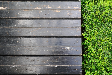 Pattern of Carmona retusa (Vahl) Masam plant and wood sidewalk for abstract background photo