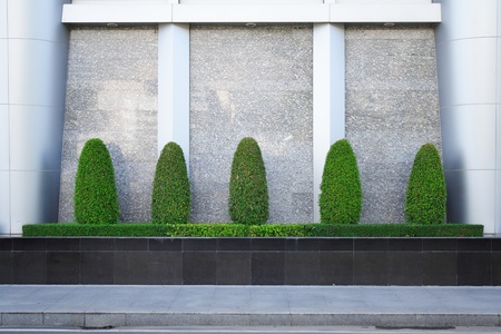 Decorative Banyan trees and bush plant are arranged in the small garden nearby modern wall Stock Photo