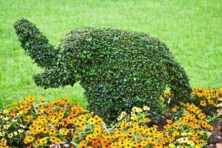 Elephant figure make from dwarf tree photo