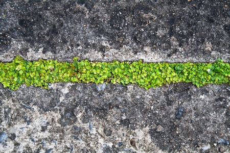 Grass grow in concrete floor photo