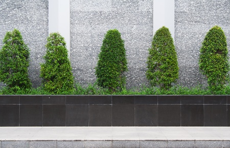 trees are arranged in flowerpot at sidewalk Stock Photo