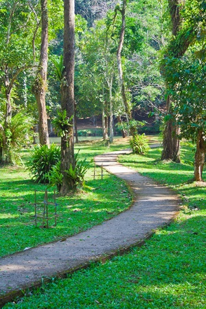 The concrete walkway in the garden of the Thai national park photo