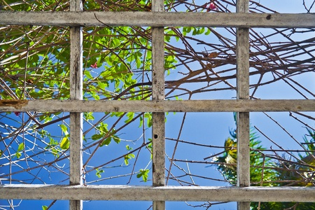 laths: Wooden laths, trees and blue sky