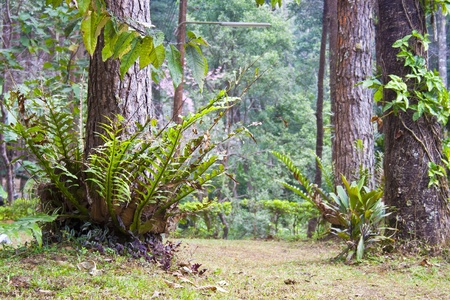 national plant: Tropical plant in Thai national park