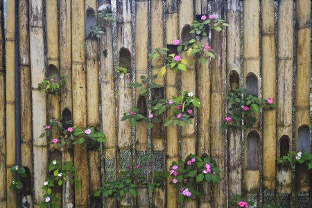 Decorative bamboo fence Stock Photo - 14025978