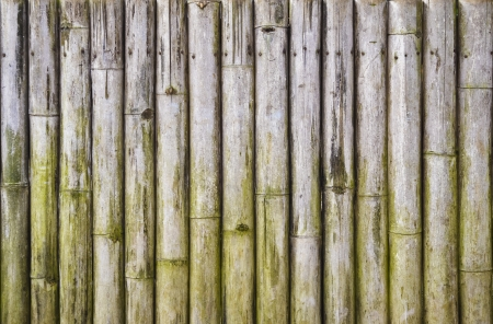 Bamboo wall Stock Photo - 14026028