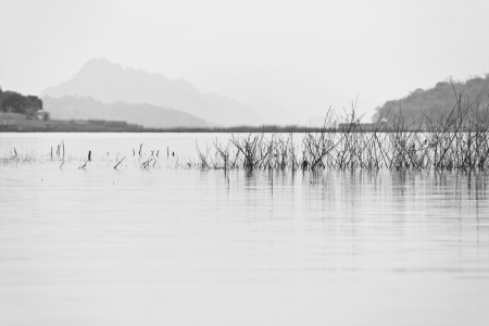 Black and white view of flood grove plant photo