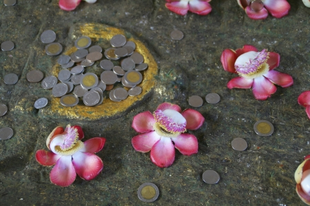 Conceptual image of coins and flowers photo